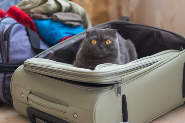 las mejores maletas de equipaje de mano